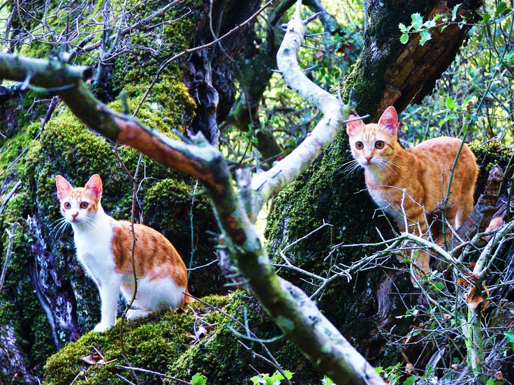 cats in the forest