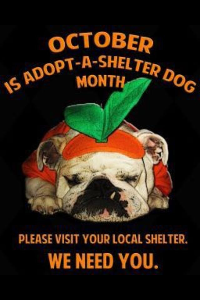 LAST CHANCE !!!! VISIT YOUR LOCAL SHELTER TODAY AND TOMORROW!!! ADOPT - FOSTER - RESCUE!!! October is Adopt-A-Shelter Dog Month