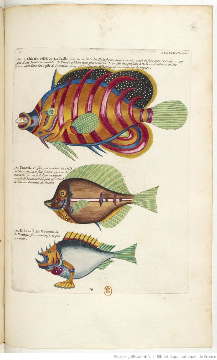 1000 images about fish on pinterest the for Donne poisson