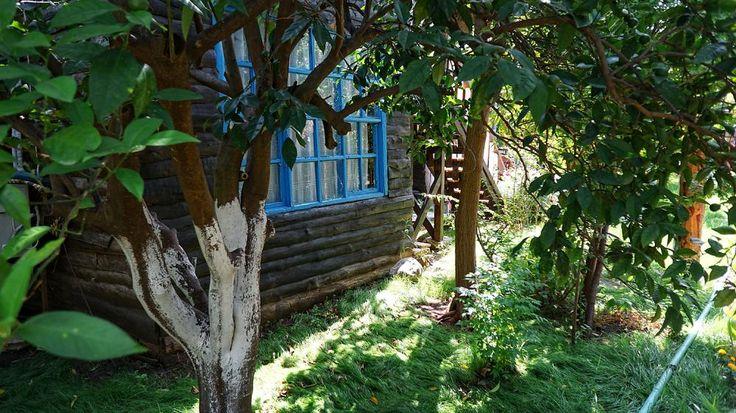 Çıralı Tahta Villa ..... #cirali #ciralihotel #ciralipension #ciralihostel #pension #hostel #lodge #ciralilodge #layover #urav #antalyahotels #antalyapension #antalyalodge #antalya #mediterranean #chimera #ciraliapart #antalyaapart #bungalow