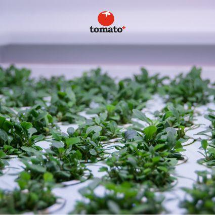 Tomato+ pods Discover the innovation www.tomatopiu.com