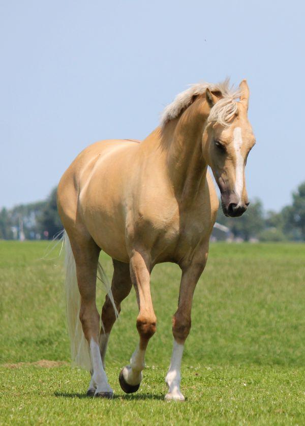 Girl fucks horse and dies photo 52