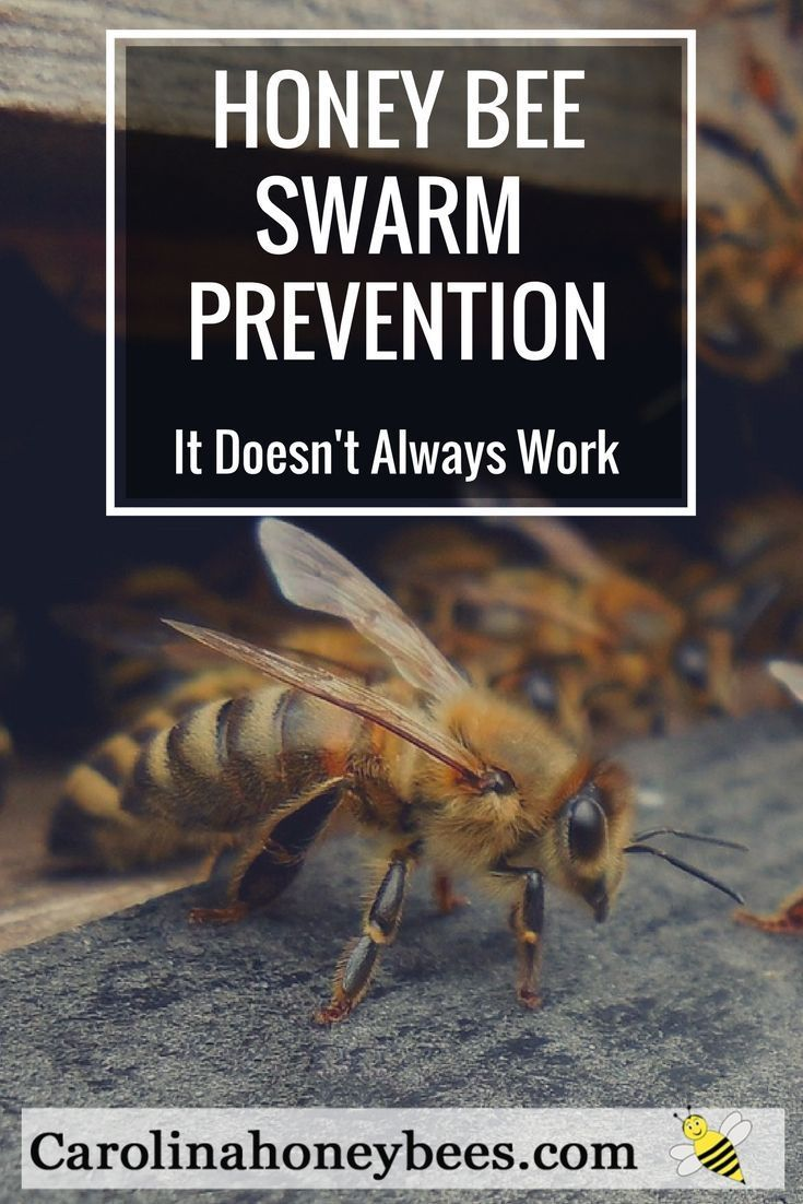 Honey Bee Swarms And The Beekeepers Who Try To Stop This Natural Process Can You Prevent A Hive From Swarming Or At Least Slow Honey Bee Swarm Bee Bee Swarm