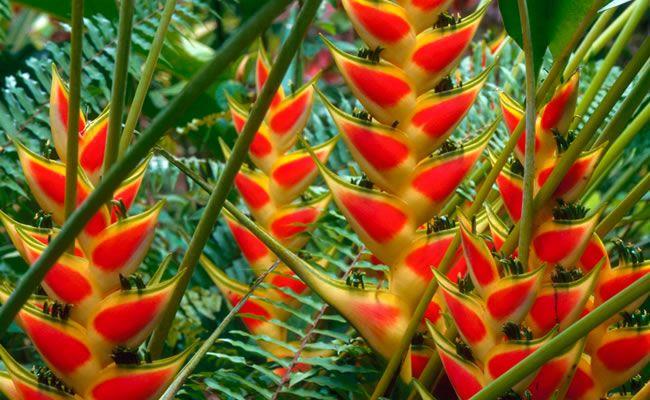 1123 best images about flore tropicale on pinterest - Clases de flores y sus nombres ...