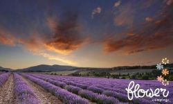 Flowercamping La Riviere, Saint Maime in de Provence. Zomer 2015