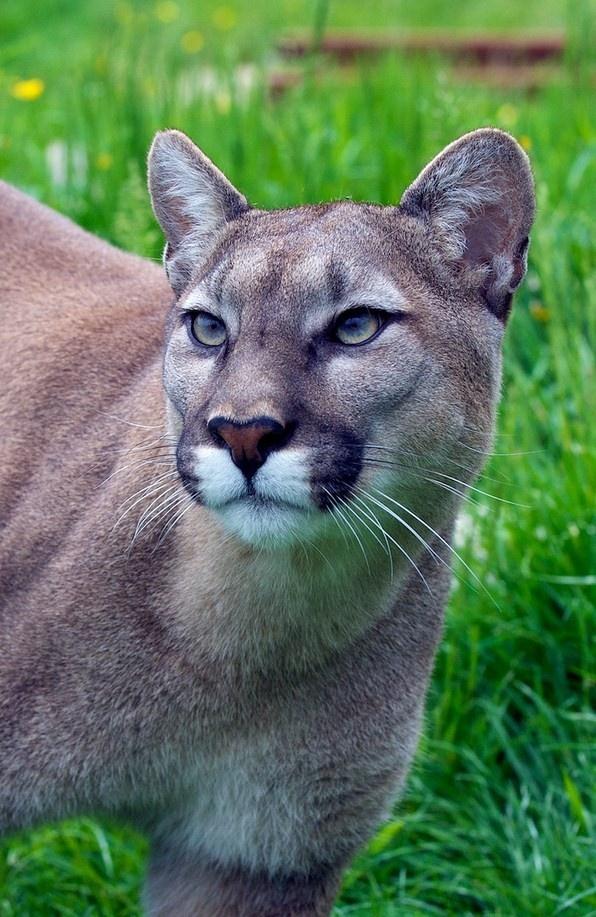 beste massasje oslo cougar life