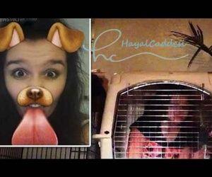 Sinirli Baba Kızını 3 Gün Köpek Kafesine Hapsetti | Hayal Caddesi