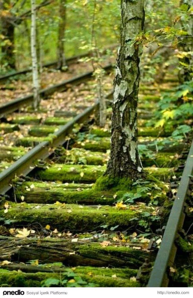 8. Terk edilmiş tren rayları, Berlin.