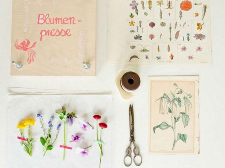 Cómo hacer una prensa para secar flores                                                                                                                                                                                 Más