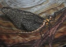 I loved making this mayfly - especially getting the wings wired up!   www.lyndaanne.com  #textileart #embroidery