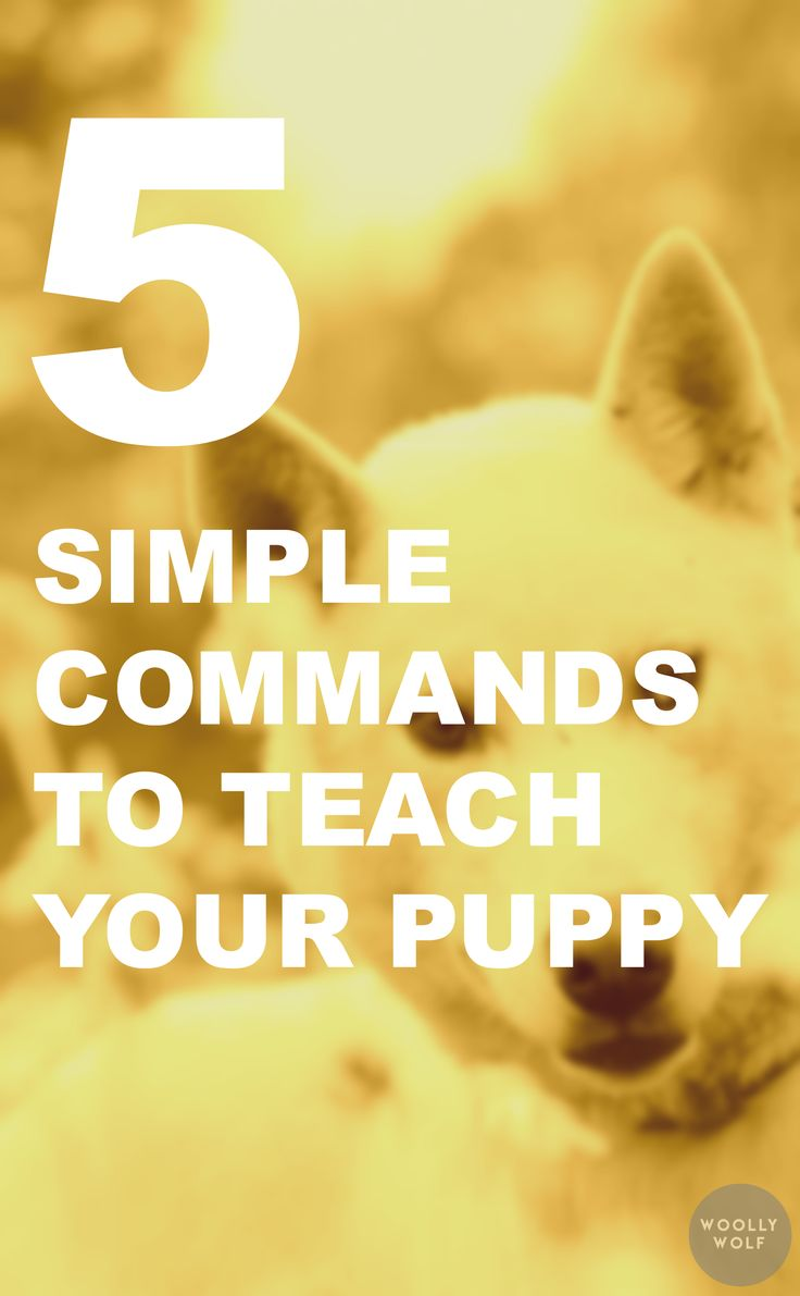 5 Simple Commands to teach your puppy right away. Dog training tips, puppy training ideas, obedience practice.