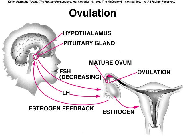 17 best images about ovulation on pinterest cervical diagram of conception diagram of anatomy of lungs #11
