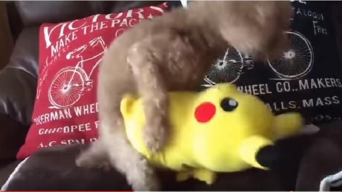 Anjing Setubuhi Pikachu - Detik-detik Saat Anjing Ini Bernafsu Memperkosa Si…