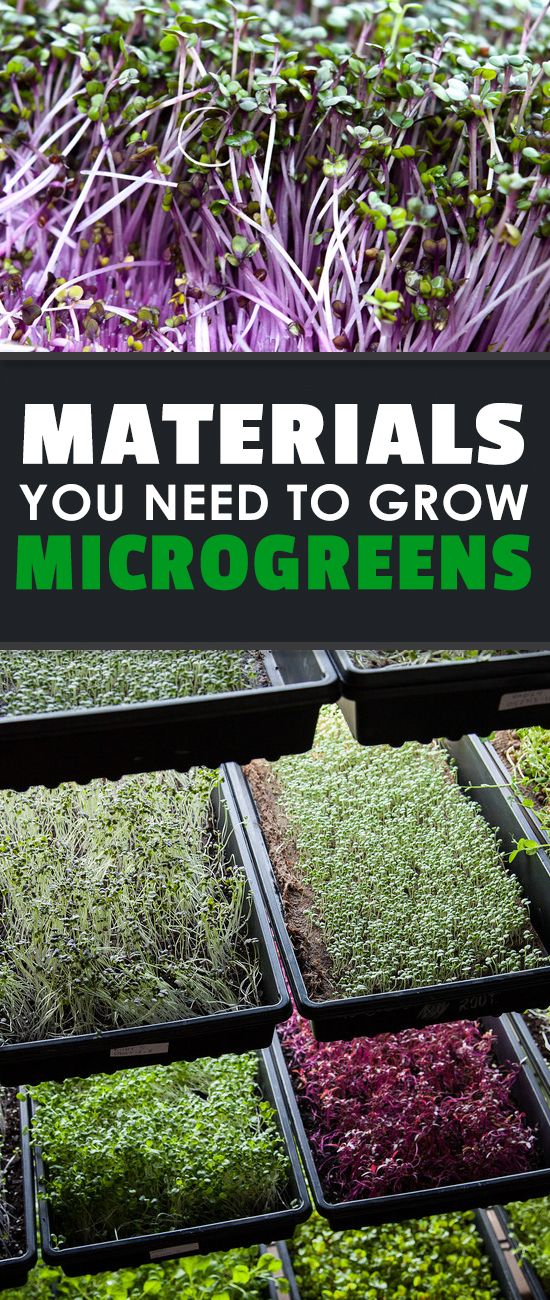 25 best ideas about hydroponics on pinterest diy for Best growing medium for microgreens