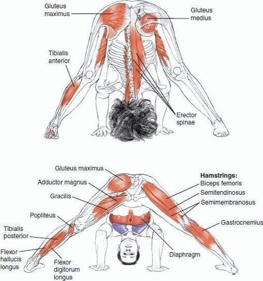 #yoga #anatomy