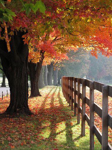 Garrison Forest ~ magical maples, Baltimore, Maryland -- photo: karma (Karen)  #maryland #travel #vacationideas