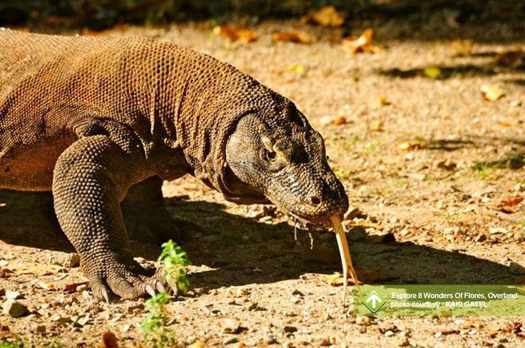 Explore 8 Wonders Of Flores, Overland December 24-31, 2013 Link : http://triptr.us/sZ Pantai Riung, Taman Nasional Komodo, Gunung Kelimutu, Bajawa, Waerebo, Labuanbajo, Maumere, Moni, Nilo, Sikka