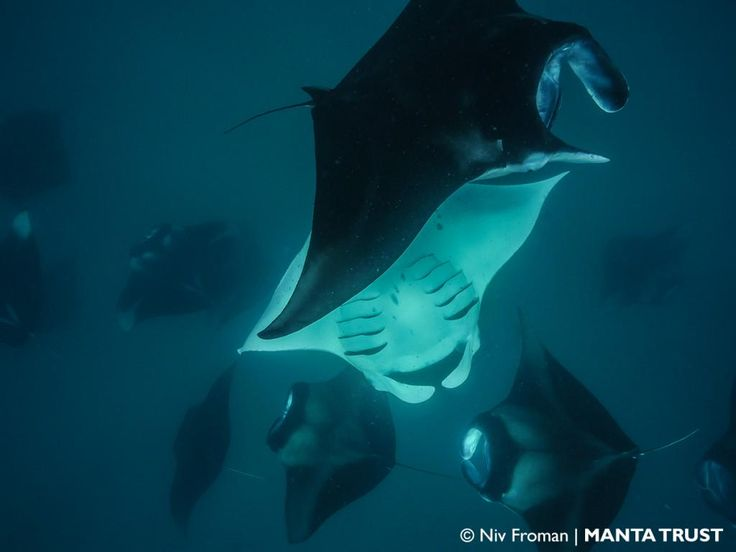 The first 2015 Manta Expedition on board the MY Duke of York has been a fantastic success!