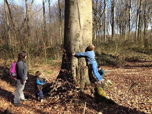 Dit zijn de 15 mooiste Vlaamse bossen - HLN.be