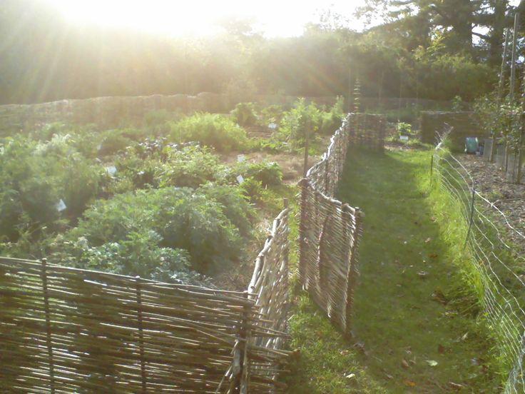 Massachusetts Renaissance Center Garden Project | In partnership ...