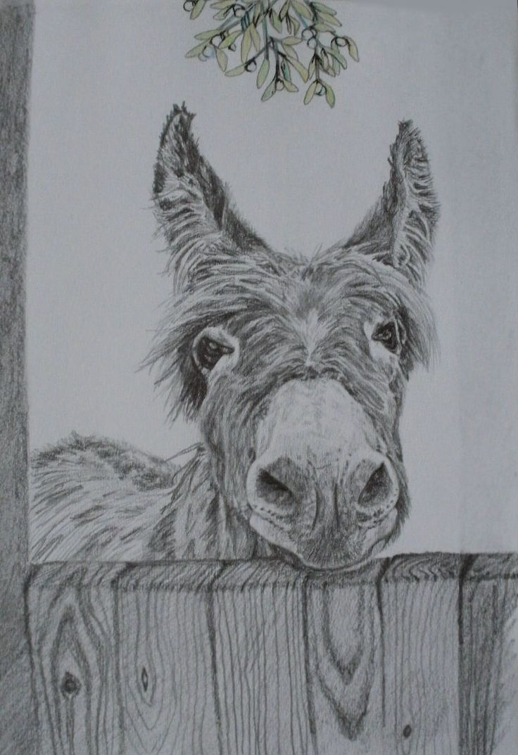 Christmas Greetings Card: Donkey under the mistletoe, taken from my pencil drawing with mistletoe in watercolours and pen.