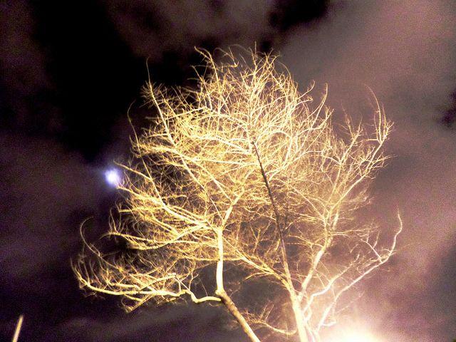 La silueta de un árbol                                             en luna llena recuerda                                                    los amores del pasado