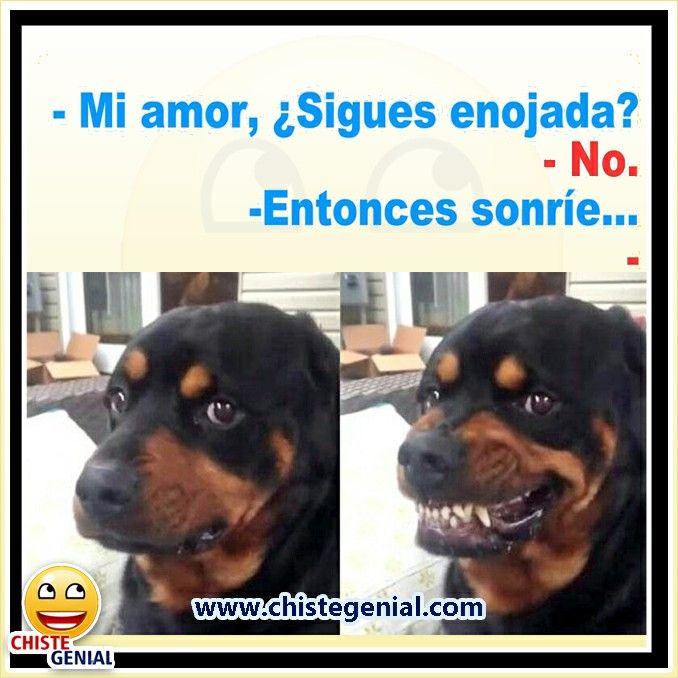 Chistes De Parejas Mi Amor Sigues Enojada Chistegenial Humor Chistes Chistescortos Funny Animal Memes Funny Dog Memes Cute Animal Memes