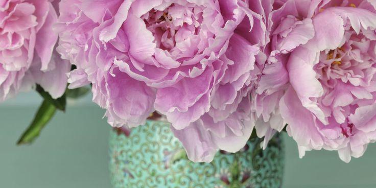 Homemade Flower Food - DIY Floral Preservative Recipe