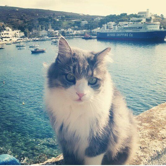 Our cat not impressed with the view... #skyros #island #linaria #marina #bay #greece # vacation #travelgram travelpic #spring #cat #notimpressed #sea #aegeansea #animallover #animals #cute #kavos #ship #sailing