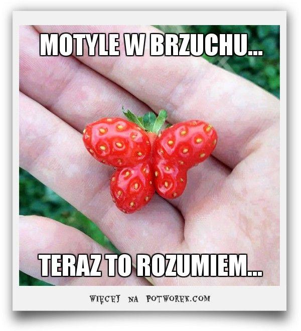 MOTYLE W BRZUCHU... potworek.com