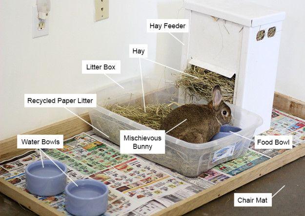 Indoor rabbit housing area