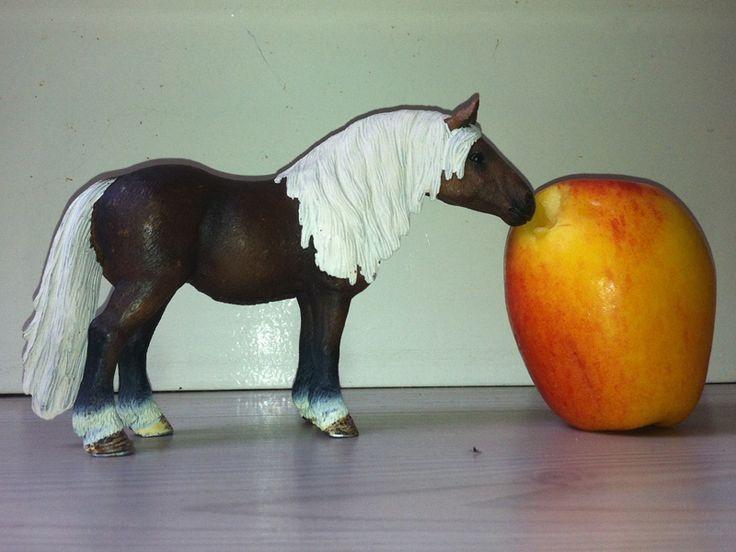 Hou jij ook van Schleich paarden? Paradepaard en Schleich toys organiseren en unieke actie: zet jouw Schleich paard op een leuke manier op de foto en win een Schleich paard naar keuze!