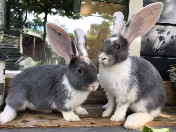 Pin by Heather Hill ⭐🌛🌝🌜⭐ on Bunnies!!!! Cute bunny