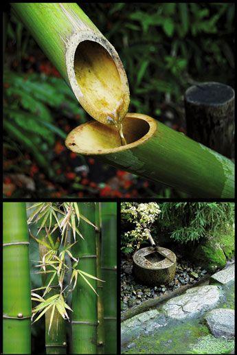 Zen Bambusy