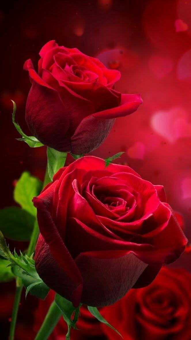 Elizabeth Adli Kullanicinin Beautiful Flowers And Roses Panosundaki Pin Guller Egzotik Cicekler Mor Gul