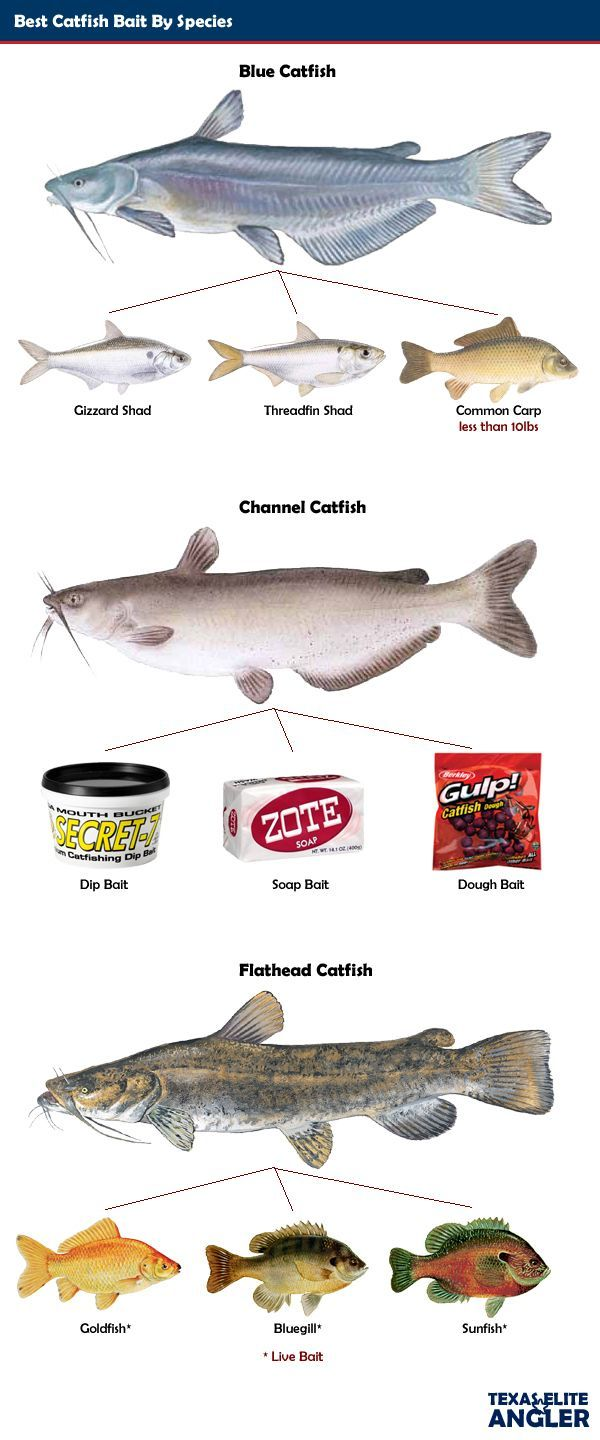 Catfish-Baits