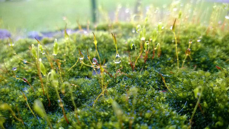 Diamond Water in the Reing of Queen Moss