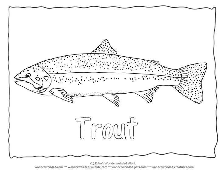 "Rainbow Trout Image to Color 3  Trout Coloring Page  with Trout Outline Pictures , Rainbow trout picture  fish with outline font of the word "" Trout"" added"