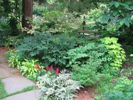 17 best images about gardening in shade on pinterest for Shade garden designs zone 6