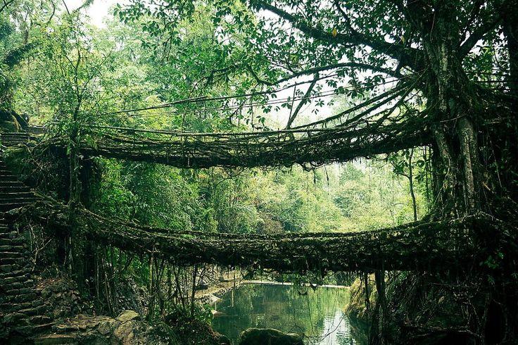 20 pontes surreais que parecem te levar para outro mundo                          Ponte de raízes na Índia
