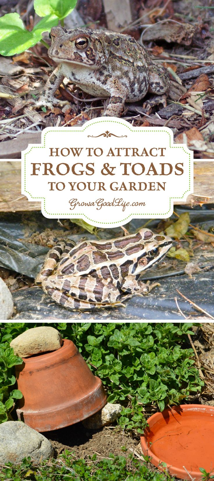 Attracting and encouraging toads and frogs to live in your garden keeps the pest population down and reduces the need for pesticides or other natural insect deterrents. Just one frog or toad can eat up to 10,000 pests during the garden season. Here are some tips on how to attract and encourage toads and frogs to live in your garden.