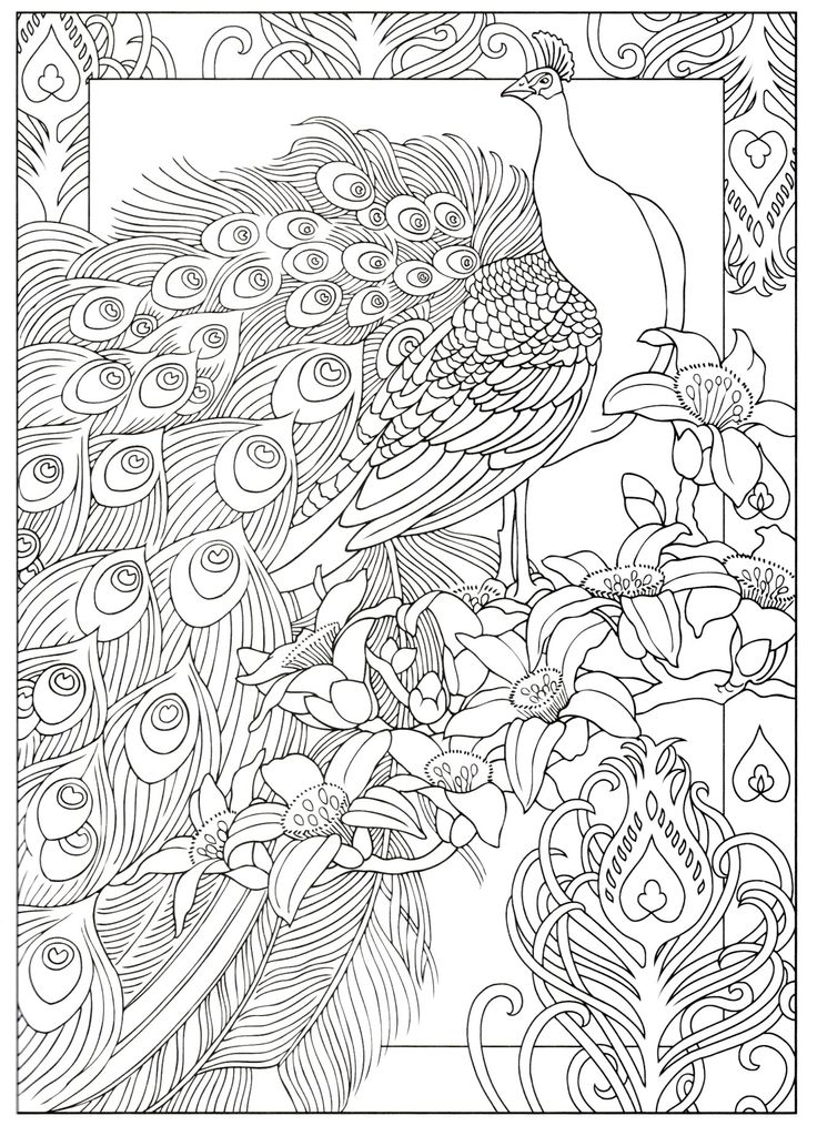 Coloring Pages Peacock 95 On Seasonal Colouring With Fresh