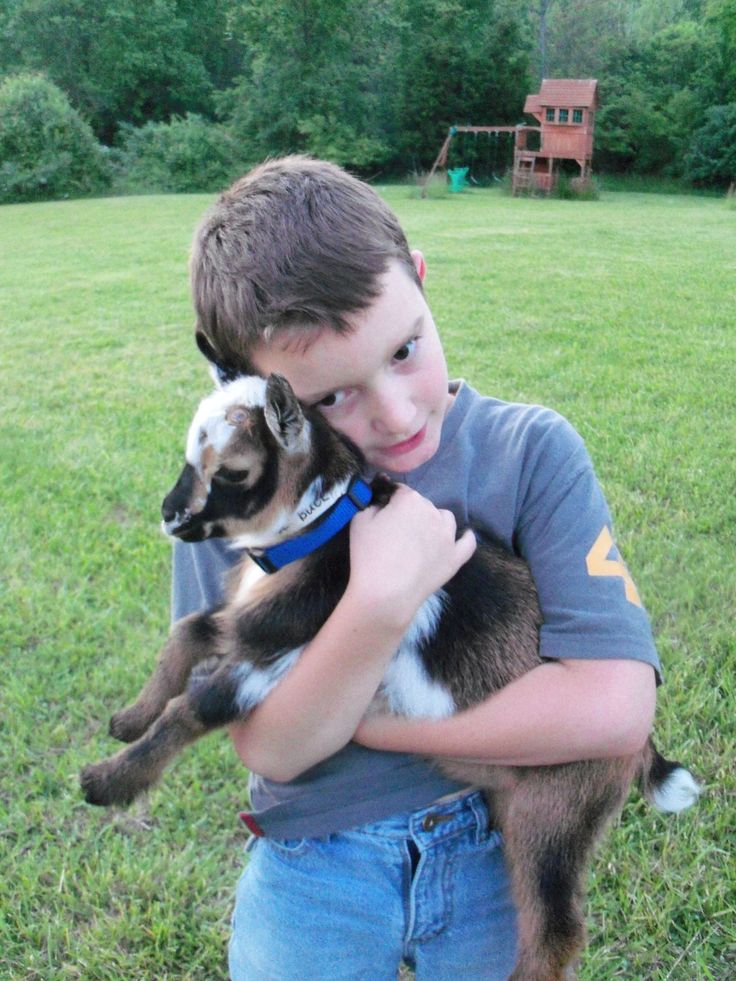 how to take care of nigerian dwarf goats