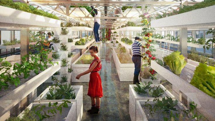 Urban Farmers este un sistem modular complet cu sere si containere de transport maritim, care poate crea o ferma acvaponica comerciala