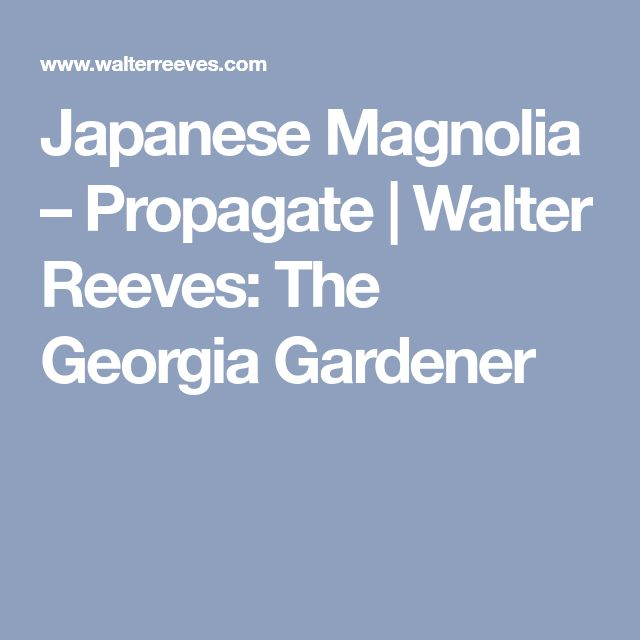 Japanese Magnolia – Propagate | Walter Reeves: The Georgia Gardener