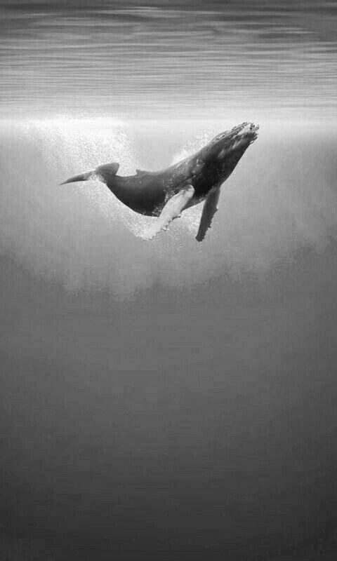 Diese Wale leben das ganze Jahr über in den #Channelislands – der perfekte Ort, um #Optout zu machen …