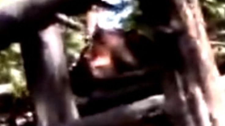 Auburn Sasquatch Spotted in Colorado Bigfoot's Footage