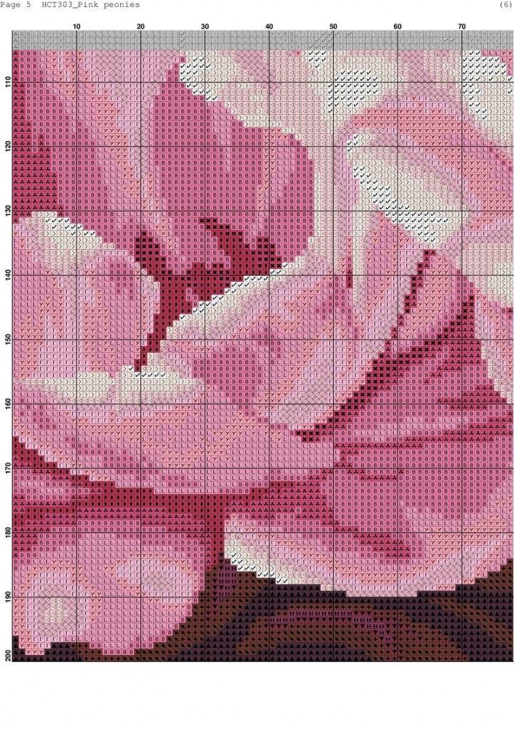 Pink peonies-005