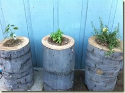 Turn old stumps into planters! via The Crafty Tulip