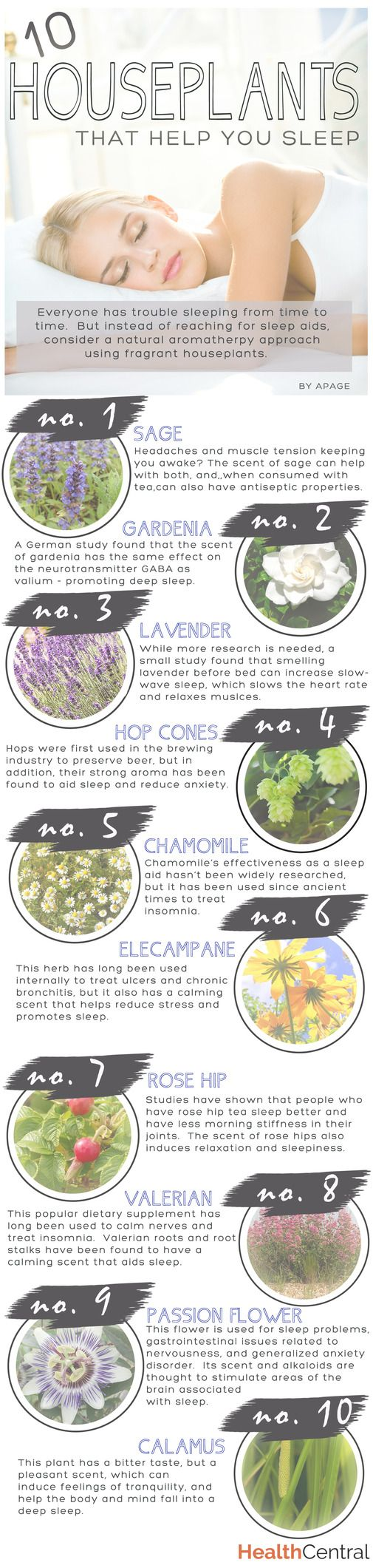 Houseplants for Better Sleep - Health Infographic Design